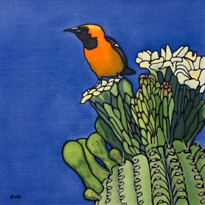 Oriole and Cactus IV