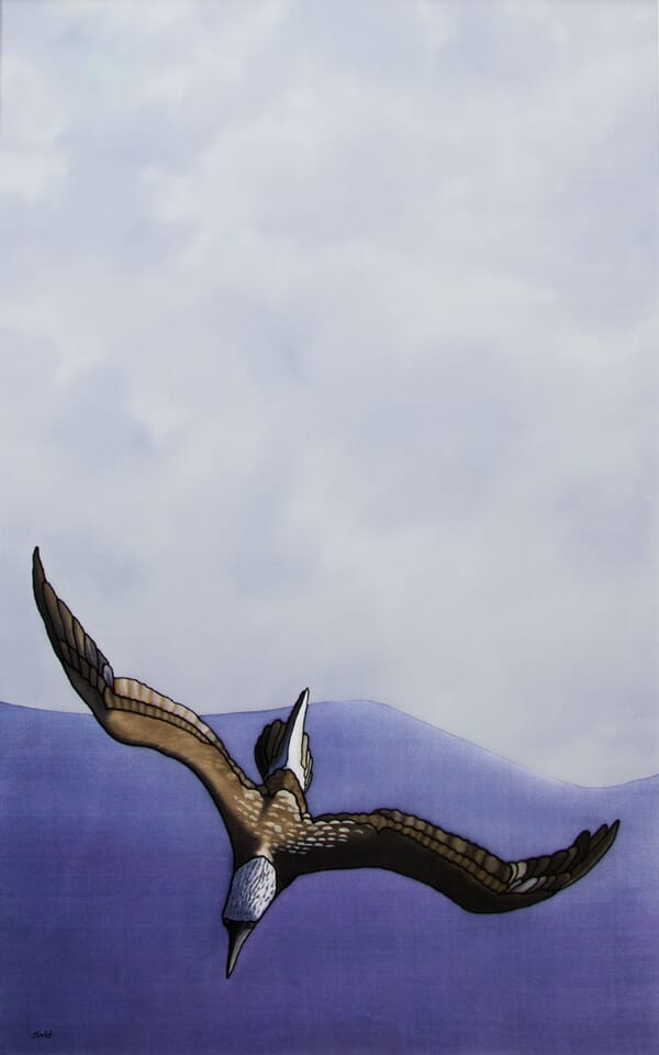 The Dive (Blue Footed Booby) - Commission a Painting