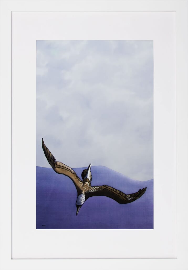 The Dive - Blue-Footed Booby