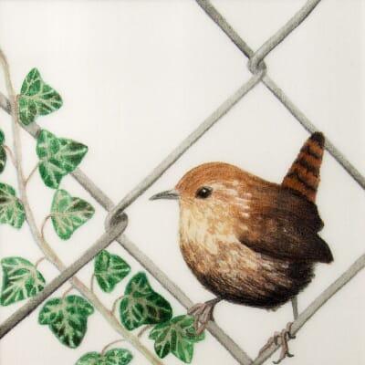 Jailbird - Escapee Wren