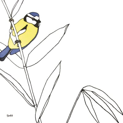 Blue Tit and Bamboo