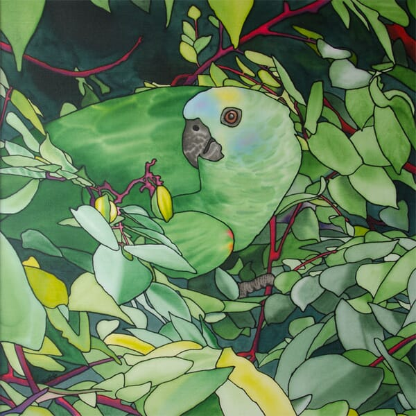 Pretty Polly - Parrot